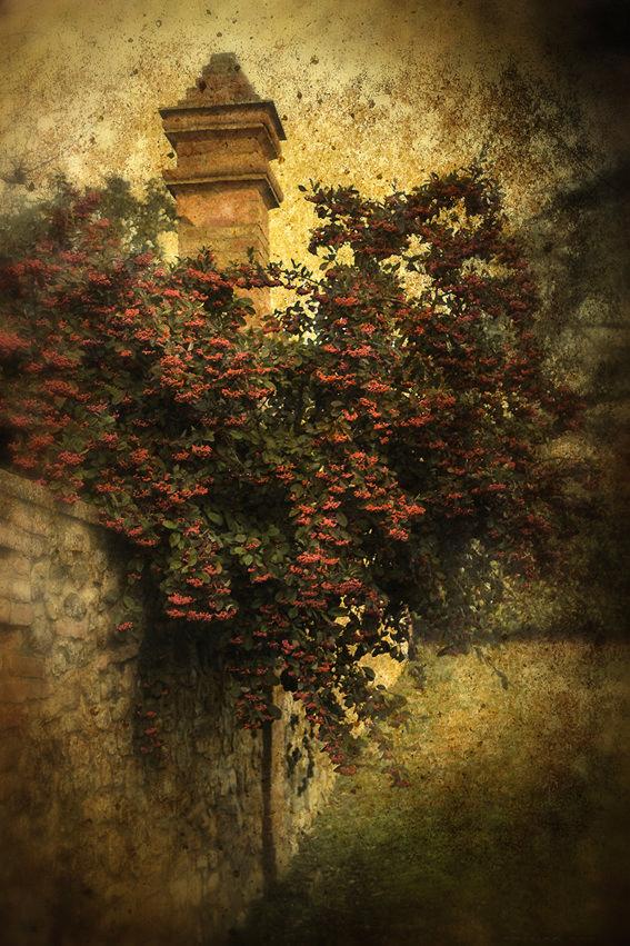 0016 tuscany garden 2